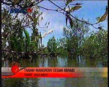 Pesona Lain Wisata Pangandaran, Aktivitas Warga dan Konservasi Mangroove