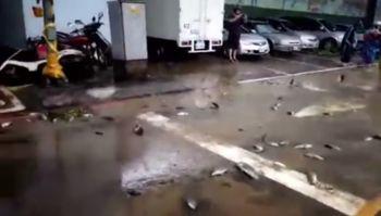 Akibat Topan Saudelor di Taiwan, Ikan Dari Sungai Terbawa Ke Daratan
