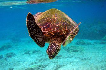 Kehidupan Makhluk Laut Yang Menakjubkan