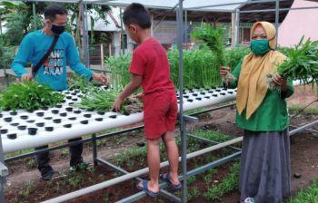 Menanam Hidroponik di Pangandaran